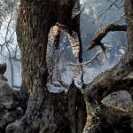 Sierra-Gata-madrugada-Hoyos-EFE_EDIIMA20150808_0335_18